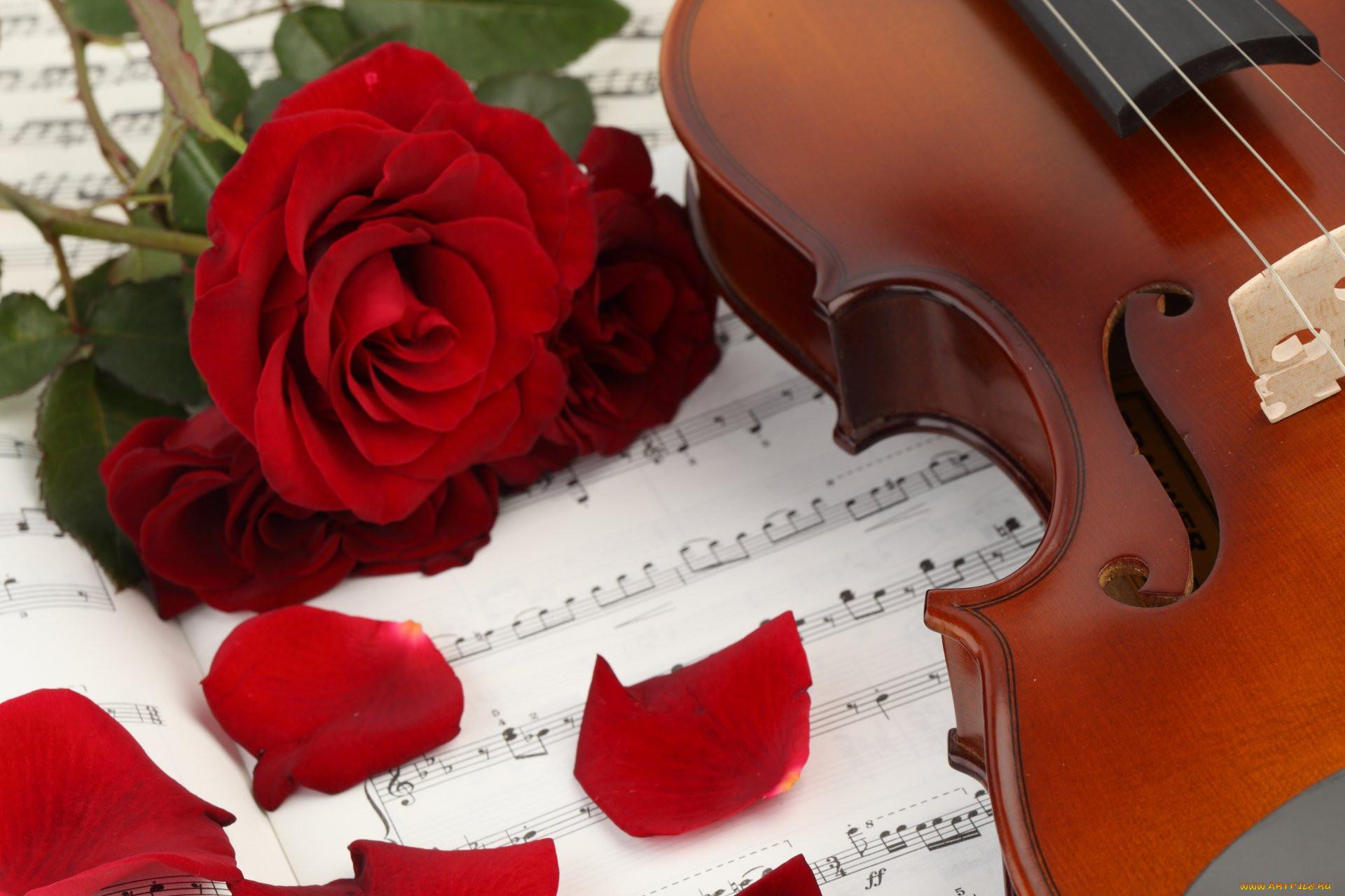 фотография фото скрипки с нотами для детей
